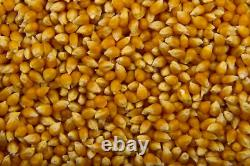 Pop Corn Machine With Matching Cart 8 OZ Large sumtasa + 5KG SEEDS + 100 CONES